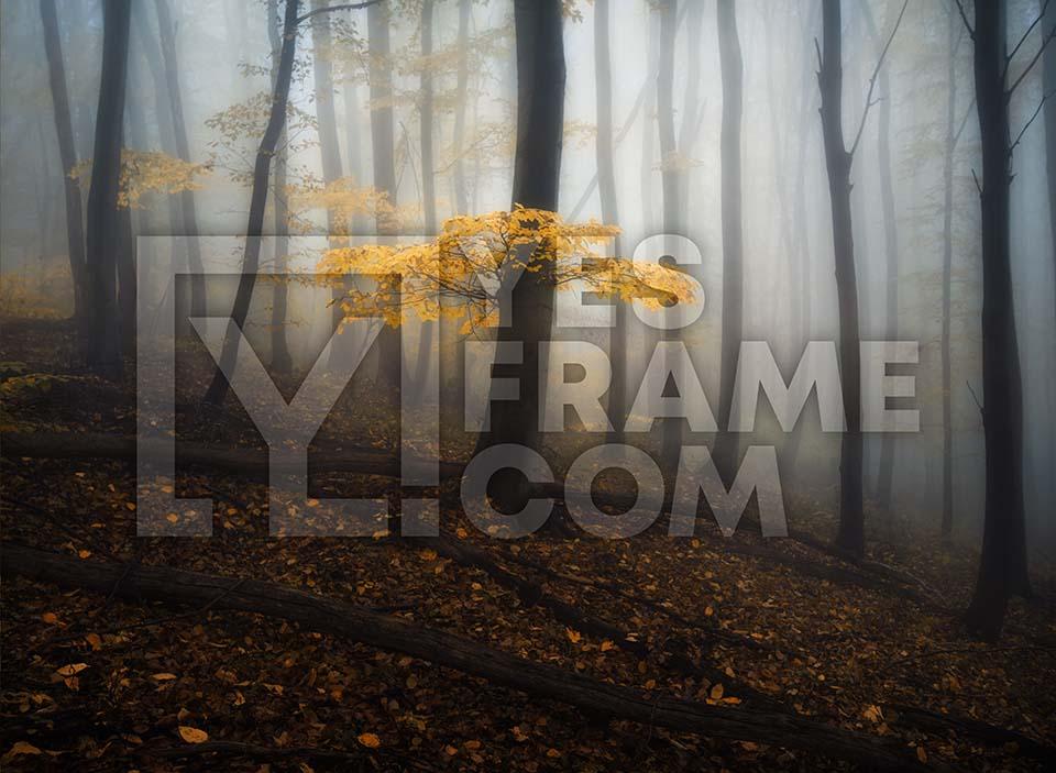 Vitosha Mountain Thumbnail PHRS018
