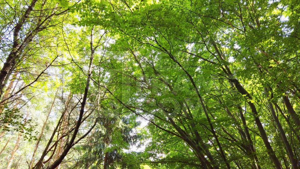Vitosha National Park Sofia thumbnail VMSS004